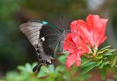 A borboleta e rosa flor — Foto Stock