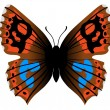 Royalty-Free Stock Vector: Nemeobius lucina butterfly