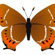 Plum hairstreak butterfly - Stock Vector