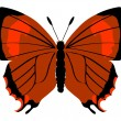 Brown Hairstreak butterfly - Stock Vector