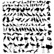 Royalty-Free Stock Vector Image: Collection of bird