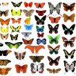 Big vector collection of butterflies — Stok Vektör
