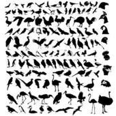 Collection of bird — Stock Vector