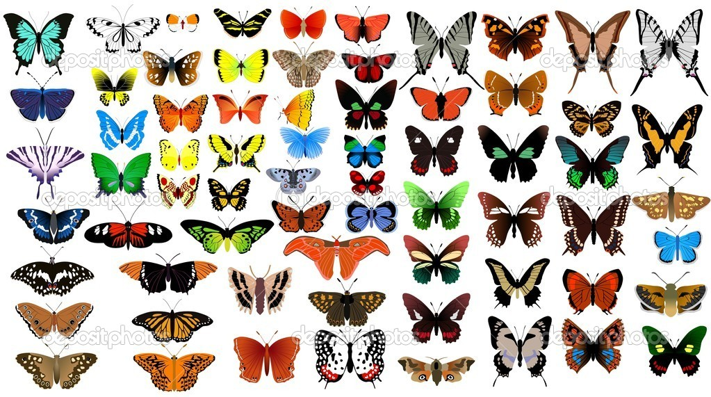 Big vector collection of butterflies — Stock Vector #2740195