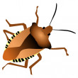 Forest bug — Stock Vector