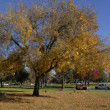 Yellow tree leaves Fall Season — Stockfoto #3813008