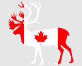 Canadian caribou — Stock Photo