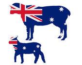 Australian sheeps — Stock Photo