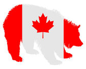 Canadian bear — Stock Photo