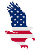 American bold eagle — Stock Photo