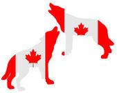 加拿大嚎叫的狼群 — 图库照片