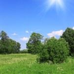 Beautiful field landscape — Stock Photo