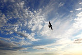 Bird on sky — Stockfoto