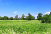 Beautiful field landscape — Stock Photo