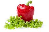 Poivre avec litho de la salade — Photo