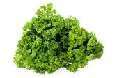 Bunch of the parsley — Stock Photo
