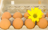 Eggs in a tray — Stock Photo