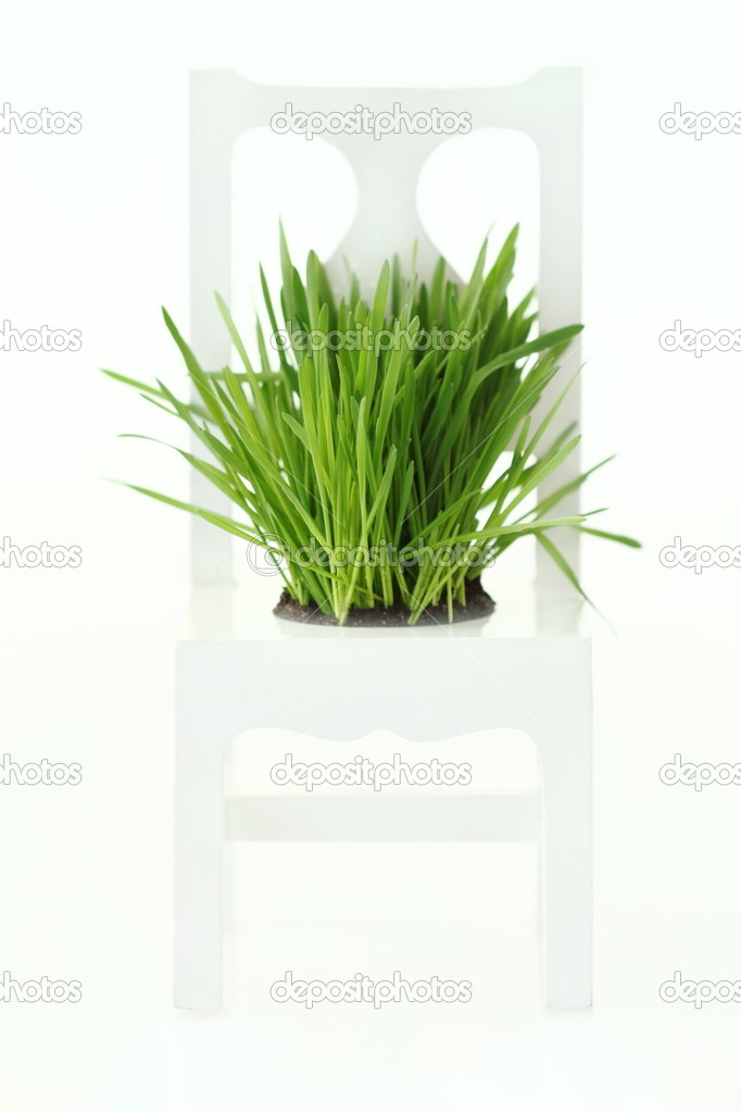 Green grass grows on wood chair with white background — Stock Photo #2726888