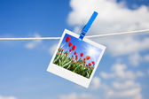 Photo with tulips — Stock Photo