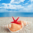 Shells and Starfish on Beach - Foto Stock