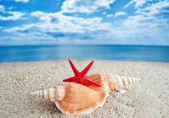 Shells and Starfish on Beach — Stockfoto