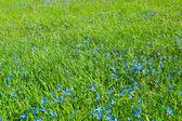 Um gramado verde jovem — Fotografia Stock