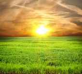 Field of a grass — Stock Photo
