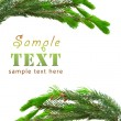 Green spruce branches — Stock Photo #3184252