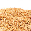 Background from mature grains — Stock Photo