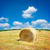 Velké seno bale pole v pozdním létě — Stock fotografie