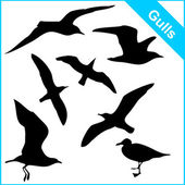 Vector silhouettes of sea gulls in various poses — Vettoriale Stock