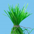 Stock Photo: Bunch of grass