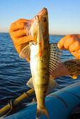 关于捕鱼的奖杯 — 图库照片