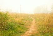 Meadow in white smoke — Stock Photo