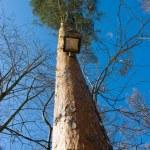 Bird-house in pine tree — Stock Photo