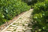 Route à travers le vignoble à prague — Photo