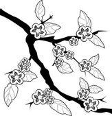 Sakura větev — Stock vektor
