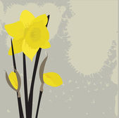 Dafodills on grunge background. Vector illustration — Stockvektor