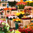 Flower market in amsterdam - 图库照片
