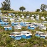 Beehive — Stock Photo #3488742