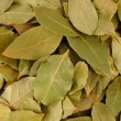 Bay leaves closeup — 图库照片