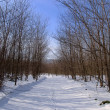 Way in winter forest — Stock Photo
