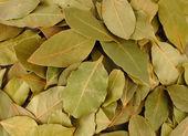 Bay leaves closeup — Stock Photo