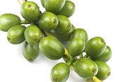 Grains de café vert — Photo