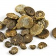 Ammonites Fossils - Stock Photo