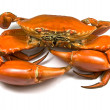 Cooked Mud Crab — Stock Photo