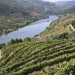 Royalty-Free Stock Photo: Vineyards of the Douro Valley