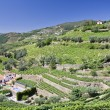 Stock Photo: Vineyards of Douro Valley