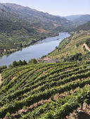 Vineyards of the Douro Valley — Stock Photo