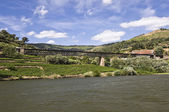 Bridges of the Douro River — Stock Photo